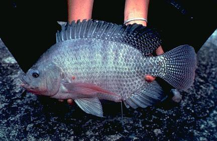 Asesoría integral en la producción de peces