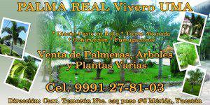 Venta de plantas y palmeras, servicios de jardineria vivero