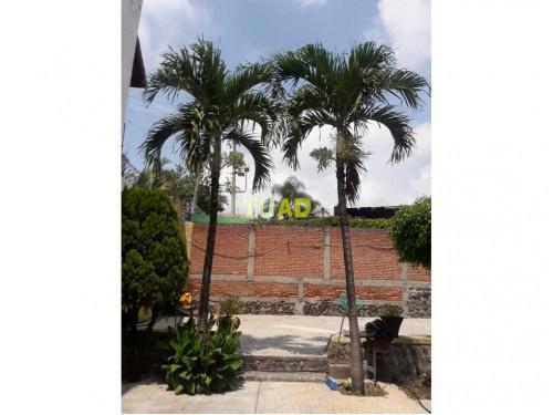 Terreno en venta en col. ampliación bugambilias