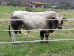 Energizadores ganaderos y accesorios para cercos electricos