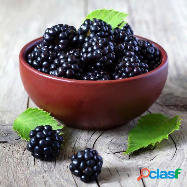 Egrow 200pcs blackberry fruit seeds home garden plantación de semillas de fruta dulce en maceta perenne