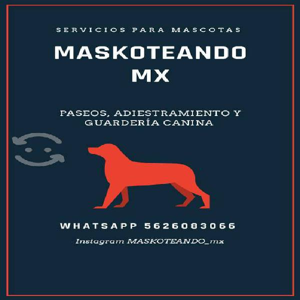Paseos, adiestramiento y guardería canina