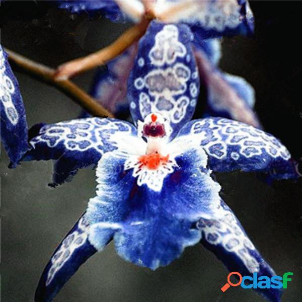 120 unids / bolsa raro orquídea hermosa orquídea semillas flor bonsai semillas orquídea semillas