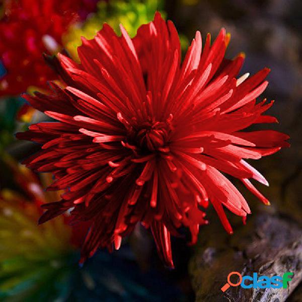 200pcs de semillas de flor de crisantemo de arco iris de raro color planta de bonsái en casa en jardín