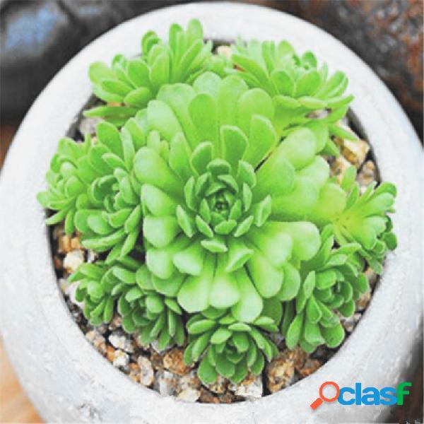 50 pc suculentas semillas bonsai de lotus lithops pseudotruncatella plantas semillas para hogar y jardín