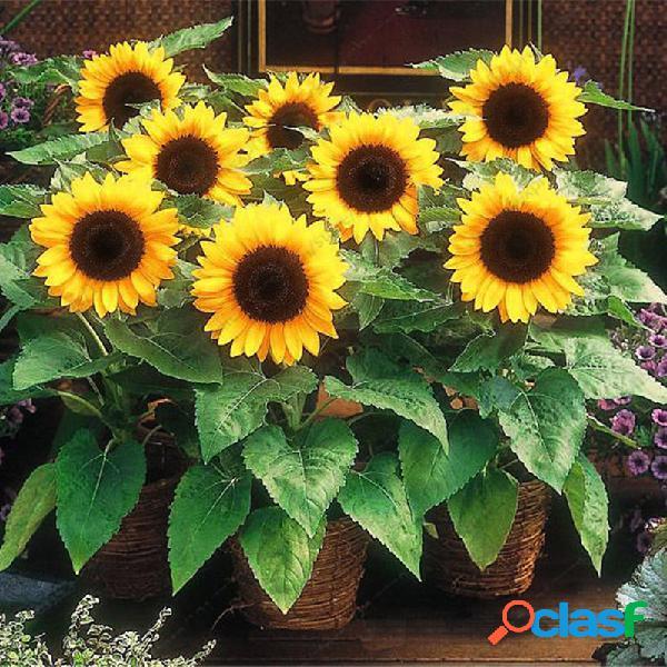 Egrow 20pcs / pack girasol semillas home garden diy snack flor decoración plantas bonsai