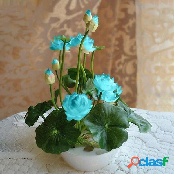 5 unids lotus semillas bowl lotus water lily semillas raro flor acuática planta home garden decor