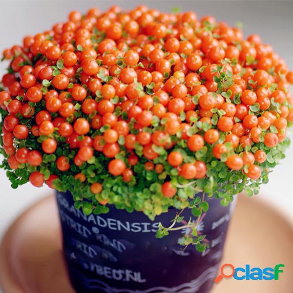 Egrow 100pcs / bolsa lámpara beads grass semillas flor semillas bonsai de jardín planta para home garden plantas