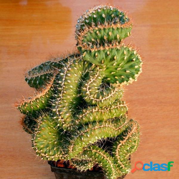 Egrow 10 unids / paquete cactus semillas rebutia variedad floración color cactus raro cactus mini planta suculenta