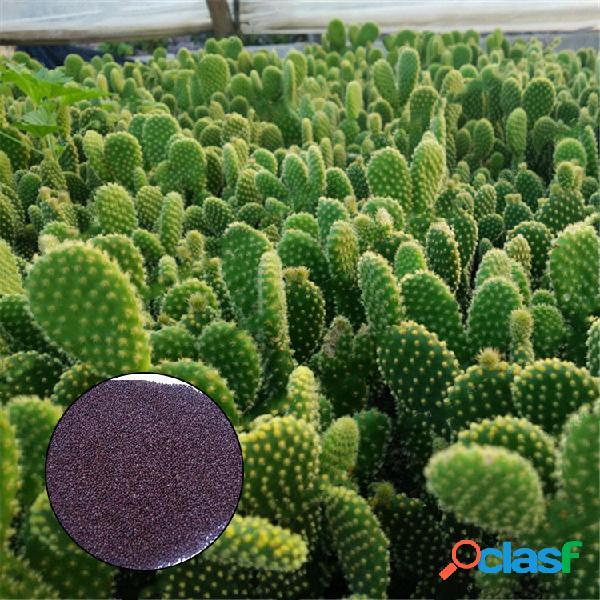 Egrow 100pcs / bolsa opuntia semillas bonsai plantas suculentas protección contra la radiación verde cactus