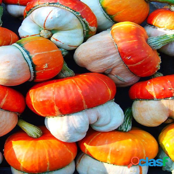 Egrow 5 unids / pack mini calabaza semillas cucurbita fruta vegetal para el jardín de su casa planta