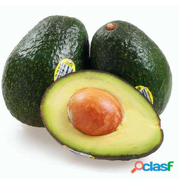 Egrow 10 unids / pack semillas de aguacate persea americana mill pera semillas diy ensalada de frutas saludables