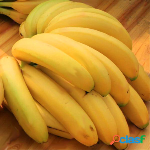 Egrow 200 unids graden semillas de plátano enano al aire libre árboles frutales leche de banana sabor perenne en maceta fruta