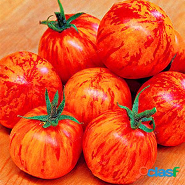 Egrow 100 unids / pack rojo verde amarillo semilla de tomate invernadero en maceta orgánica vegetales y frutas semillas