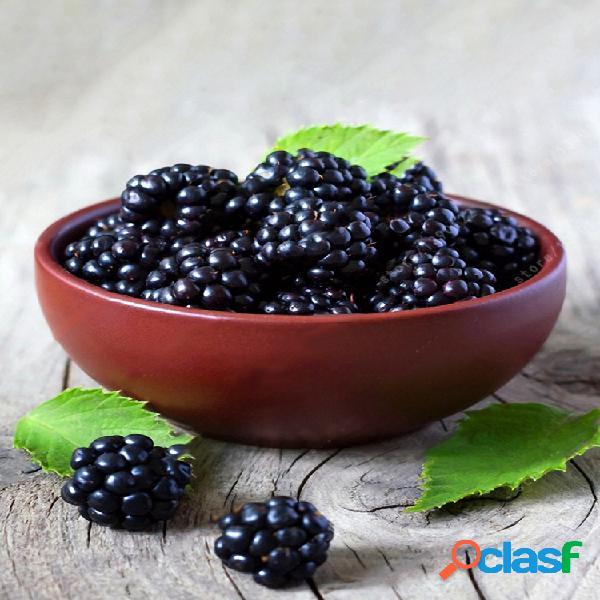 Egrow 200pcs blackberry fruit semillas home garden planting semilla de fruta dulce en maceta perenne
