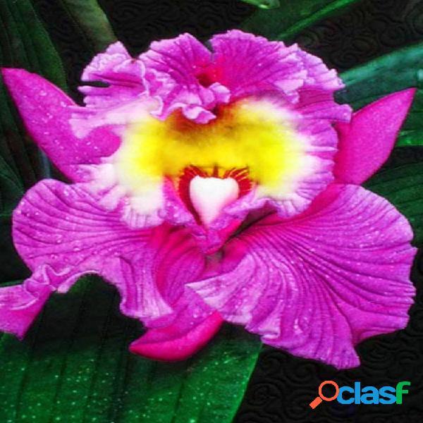 Egrow 100pcs / pack monkey face orchid semillas home garden bonsai plantas flores