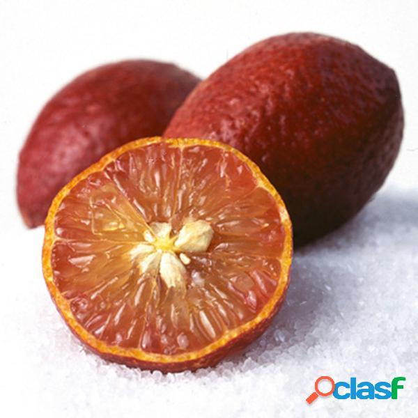 Egrow 20 unids / pack semillas de limón de color rojo drawf tree bonsai semillas de frutas orgánicas home garden plants