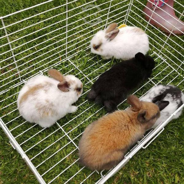 Conejos animales