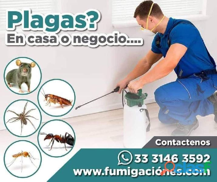 Fumigaciones guadalajara sanea control de plagas