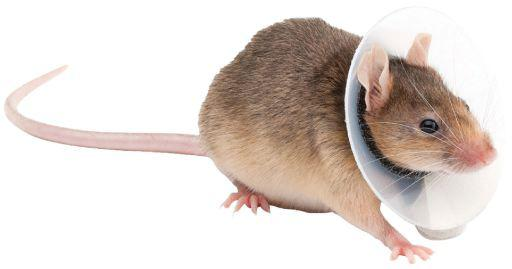 Kvp saftshield roedores 5.75-7.5 cm / 9.5 cm